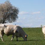Agriculture Diémoz - Elevage 1